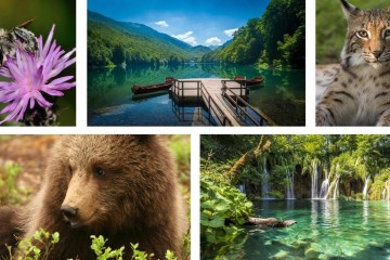 On Biodiversity Day, we are celebrating biological diversity of the Western Balkans