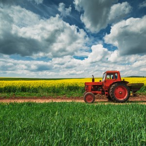 Worker in field (Photo: Shutterstock)